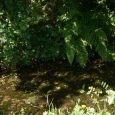 This small stream, a tributary to the river Penzé is situated on the land of the municipality of Saint-Thegonnec in the departement of Finistère in Brittany. The name «ruisseau de […]