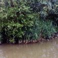 This spot is situated just in the back of my factory. After many attempts to find water mites during my lunch time I was very suprised to find some of […]